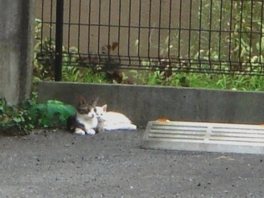 親猫.子猫